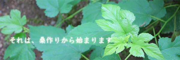 桑の葉(まゆっこクラブ)